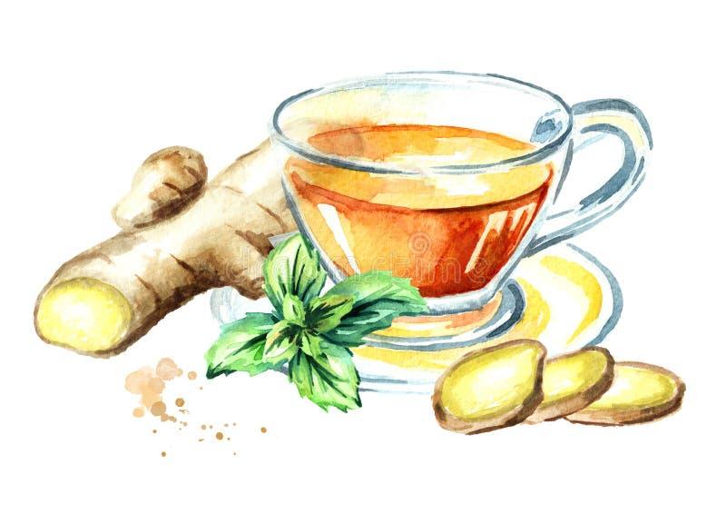 Kopp av varmt te med ingefäran och mintkaramellen som isoleras på en vit bakgrund vektor illustrationer