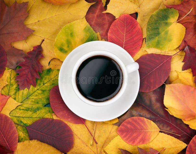 Kopp kaffe över höstsidor royaltyfri foto