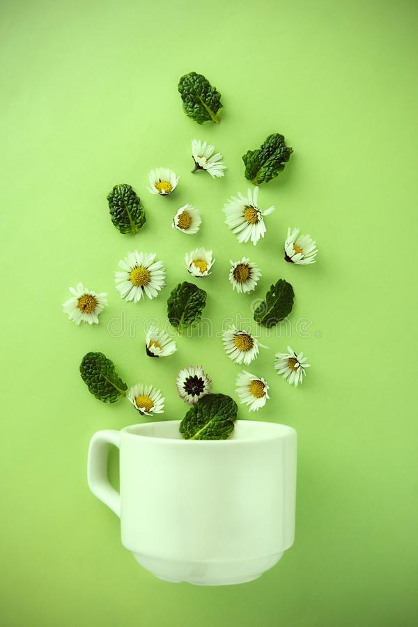 Kopp te och kamomillar växt- naturligt tebegrepp Vit kopp te med kamomillblommor arkivfoton