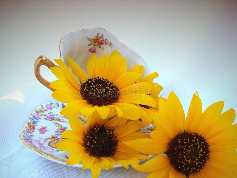 Download Koppblommor arkivfoto. Bild av blom, kaffe, blommor, teacup - 32556