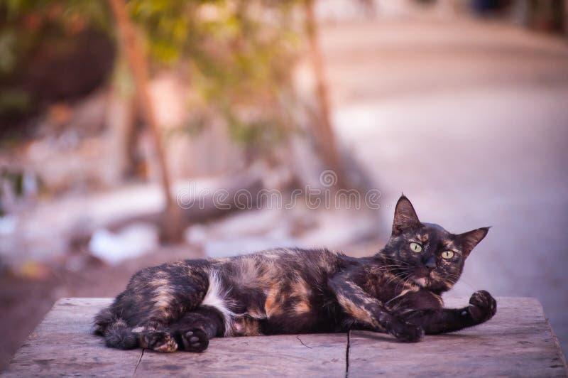 koppla av för katt arkivfoton