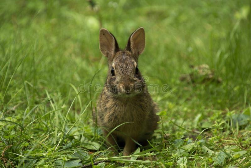 Koppla av kaninen fotografering för bildbyråer