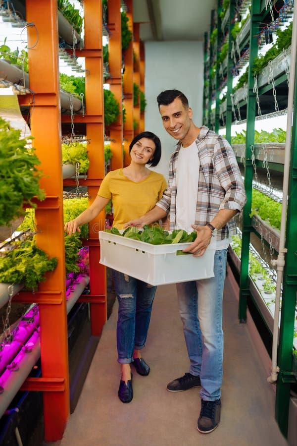 Koppla ihop av bönder som ler, når du har växt grönsallat i växthus royaltyfri fotografi