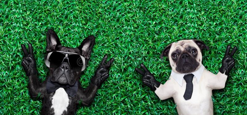 Koppla ihop av hundkapplöpning arkivfoton