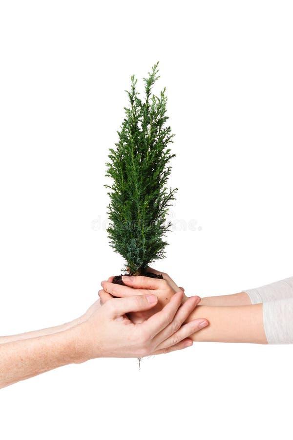 Koppla ihop händer som rymmer det unga trädet April 22 för jorddag begrepp spara världen Miljö- ekologiväxtnaturvård arkivbild