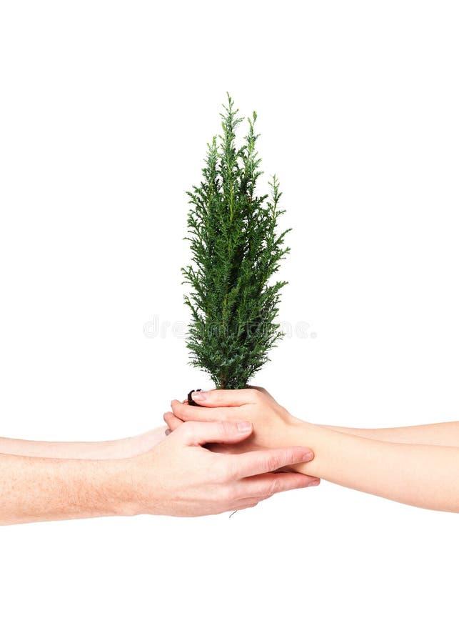Koppla ihop händer som rymmer det unga trädet April 22 för jorddag begrepp spara världen Miljö- ekologiväxtnaturvård royaltyfria foton