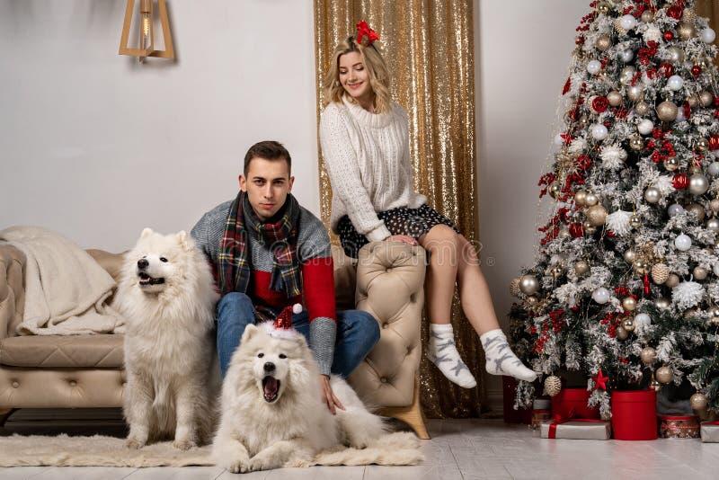 Koppla ihop med hundkapplöpning som sitter på soffan nära julgranen royaltyfri bild