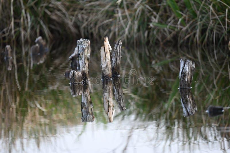 Koppla ihop stycken av träpinnar ut ur vattnet och ger en trevlig spegel i vattnet fotografering för bildbyråer