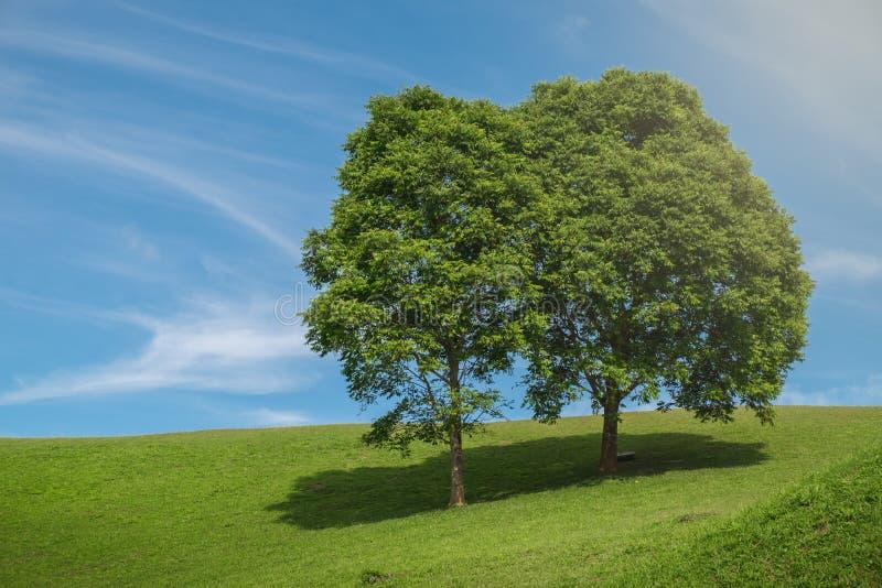 Koppla ihop trädet och fältet royaltyfri bild