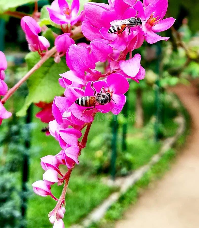 Kopplar samman i blomma Bild som tas från lalbagbanglore royaltyfri foto