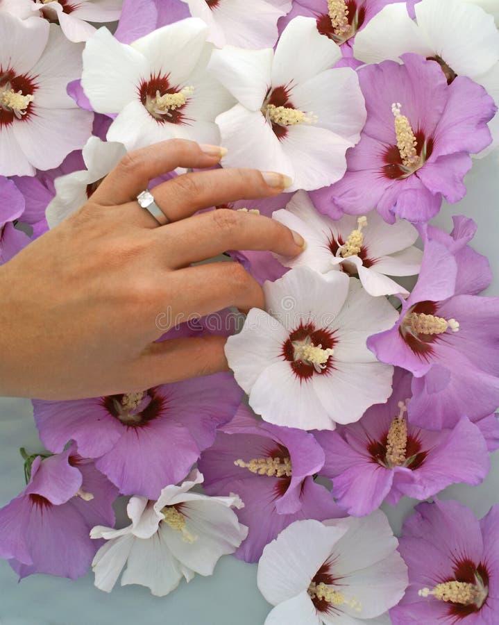 kopplingen blommar handcirkeln royaltyfri foto