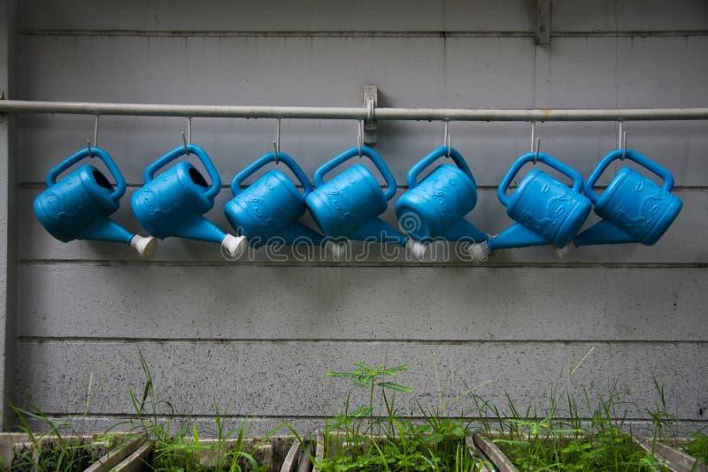 kopyści rośliien woda zdjęcia royalty free
