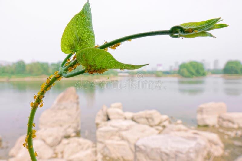 Korówki i roślina zdjęcie royalty free