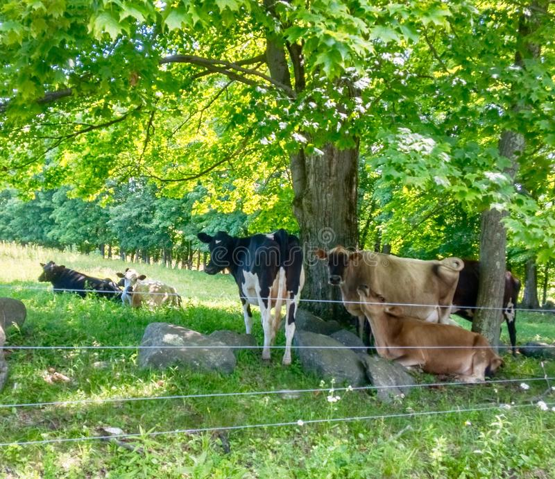 Kor i sätta in arkivfoton