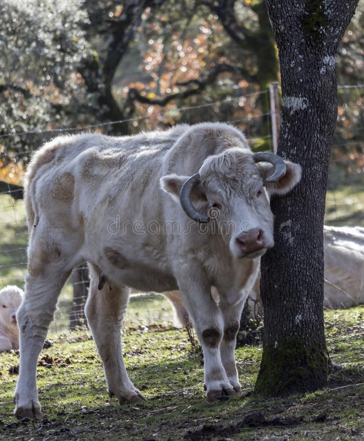 Kor i sätta in arkivbild