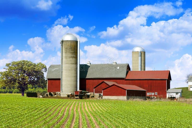 Kor mjölkar lantgården royaltyfri bild