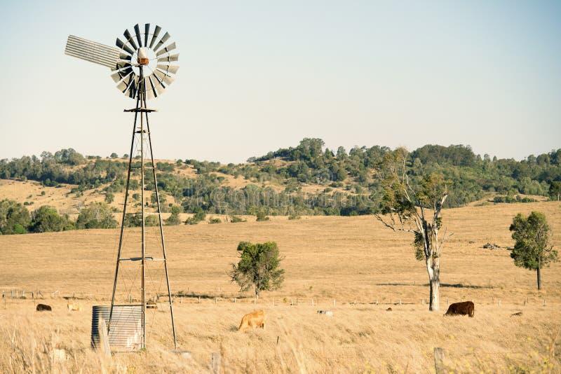 Kor och en väderkvarn i bygden royaltyfria foton