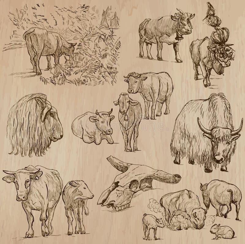 Kor och nötkreatur - räcka den utdragna vektorpacken royaltyfri illustrationer
