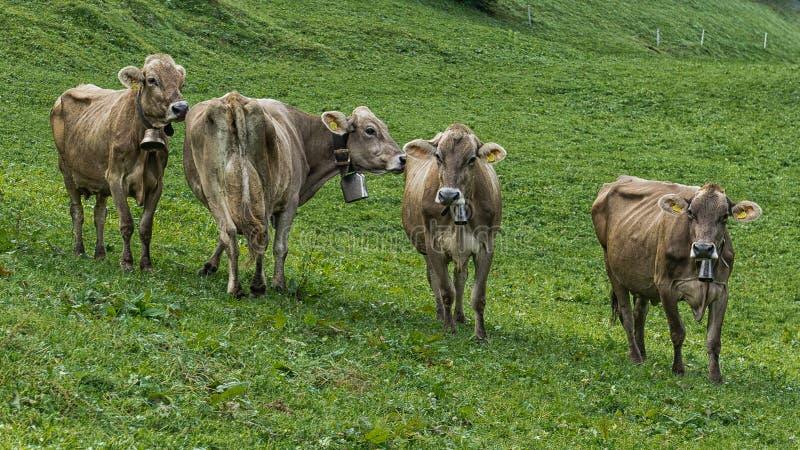 Kor sätter in in royaltyfri fotografi