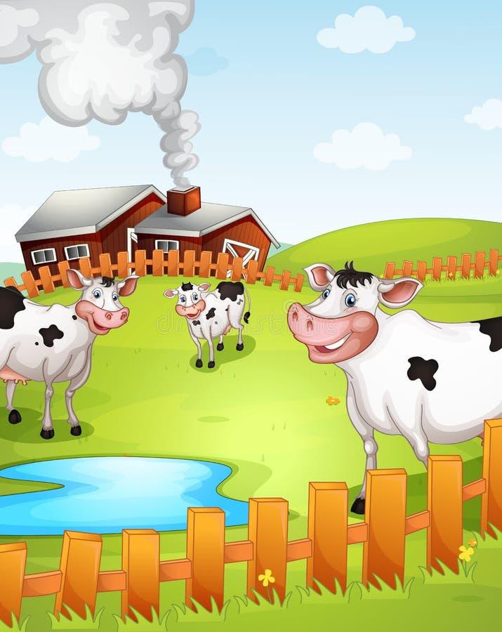 Kor som betar i lantgård stock illustrationer