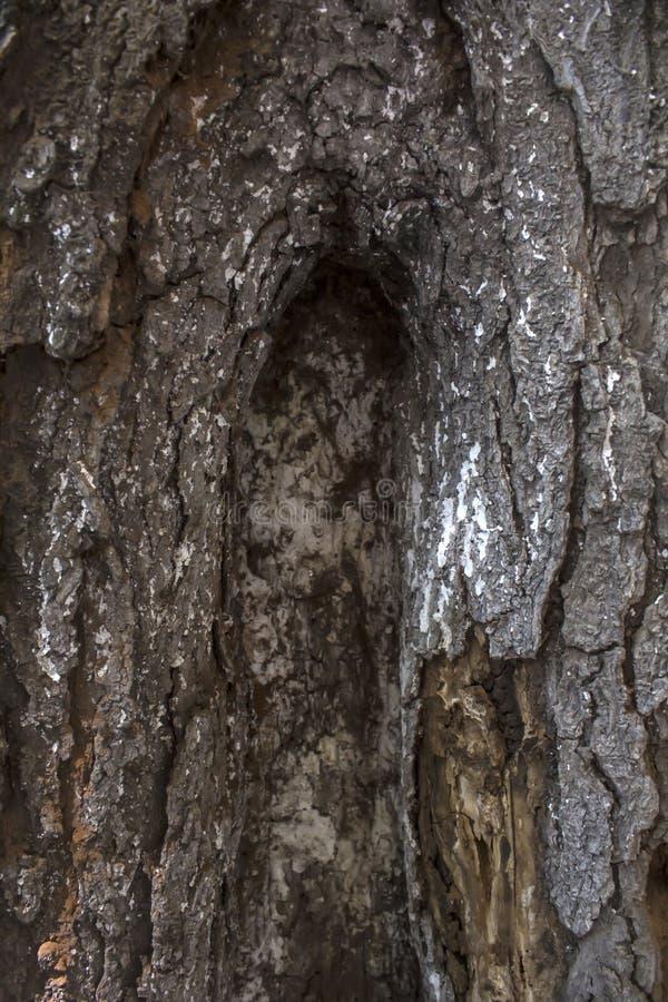 Kora drzewna bliska z drobnymi szczegółami obrazy stock