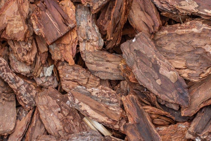 Kora drzewna przecina tło naturalne drewniane Brązowe naturalne kawałki suchego drzewa liściastego obrazy stock