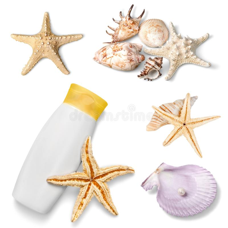 koraal royalty-vrije stock afbeelding