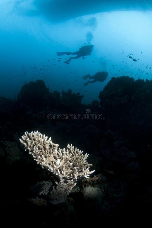 Koraal en scuba-duiker stock foto's