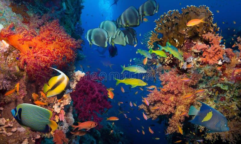 Koraal en vissen stock afbeeldingen