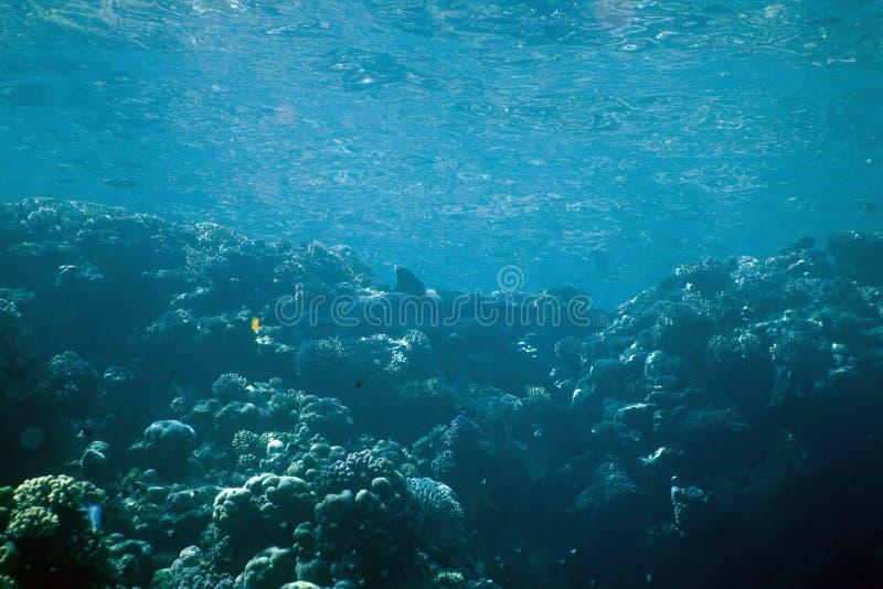 Koraal en vissen stock fotografie