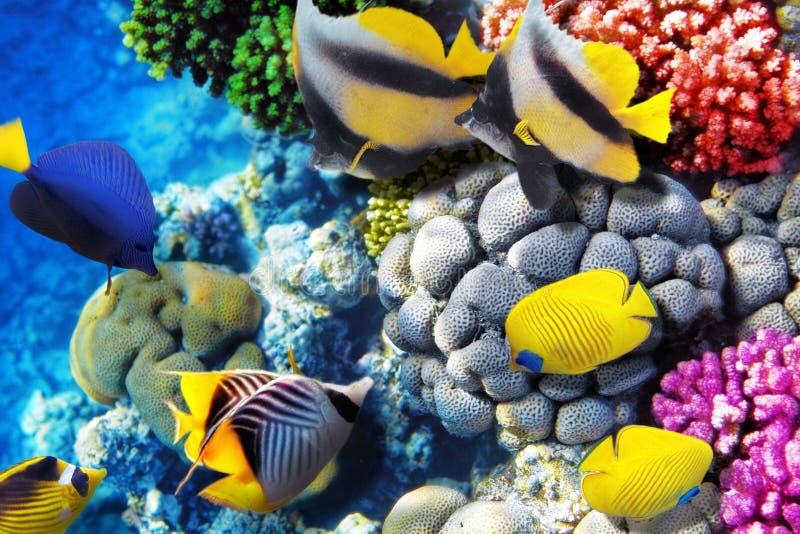 Koraal en vissen in het Rode Overzees. Egypte, Afrika. royalty-vrije stock afbeeldingen