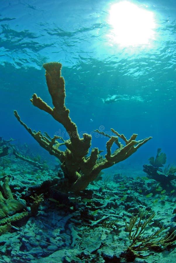Koraal in oceaan stock afbeelding