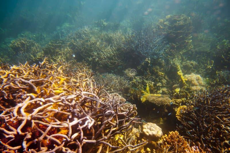 Koraalrif - Australië stock afbeelding