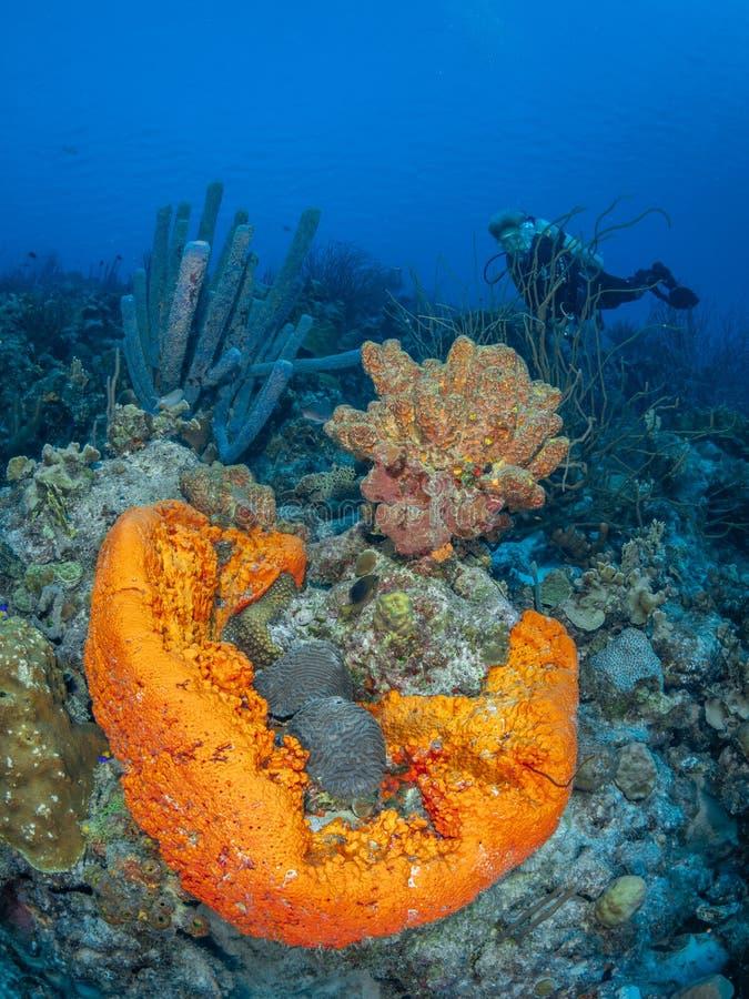 Koraalrif in Bonaire Caraïbisch duikvakantie stock fotografie