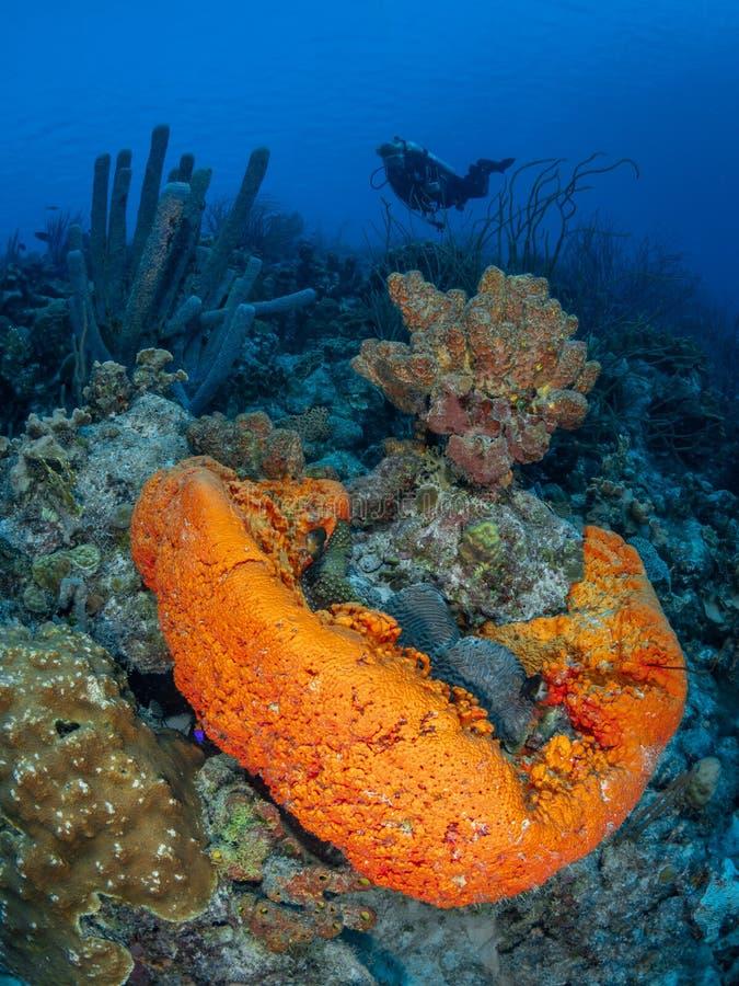 Koraalrif in Bonaire Caraïbisch duikvakantie royalty-vrije stock afbeelding