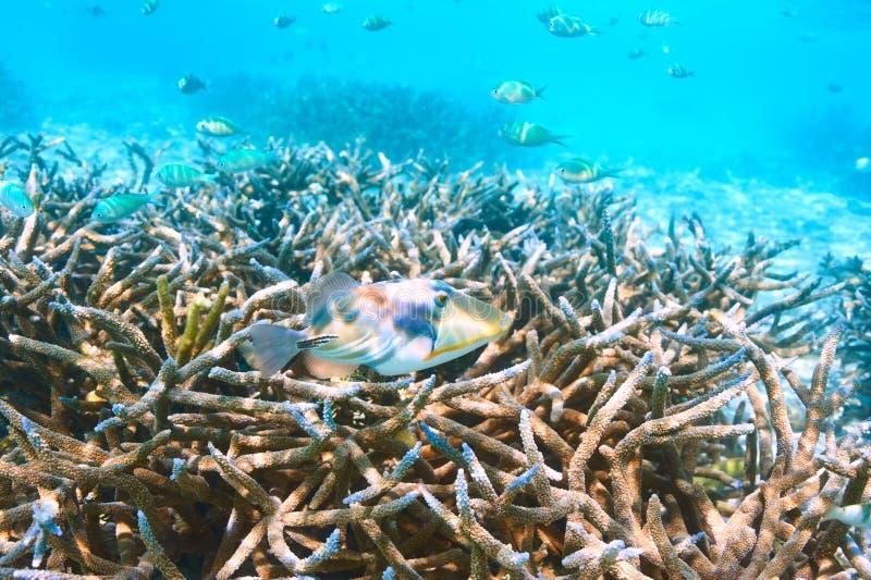 Koraalrif in de Maldiven stock afbeelding