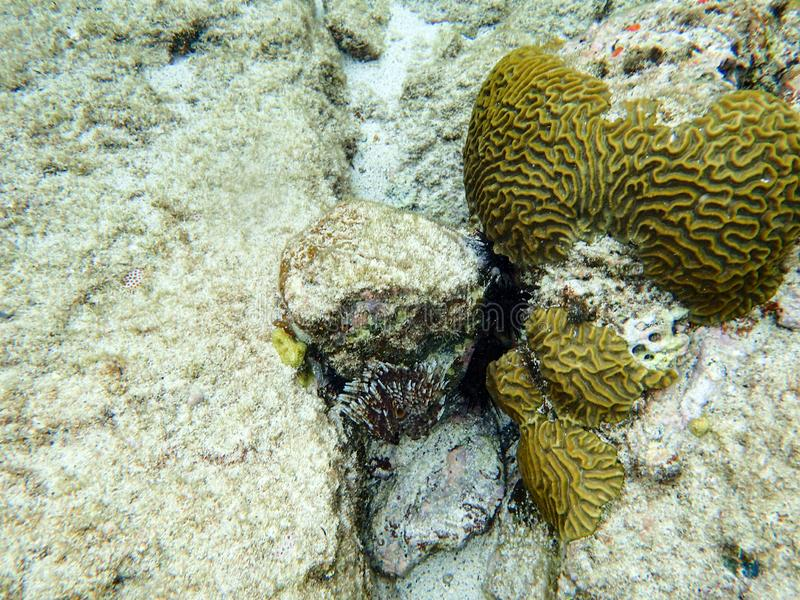 Koraalrif in de oceaan stock afbeeldingen