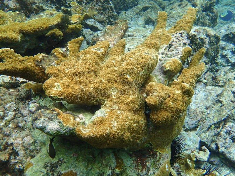 Koraalrif in de oceaan royalty-vrije stock foto