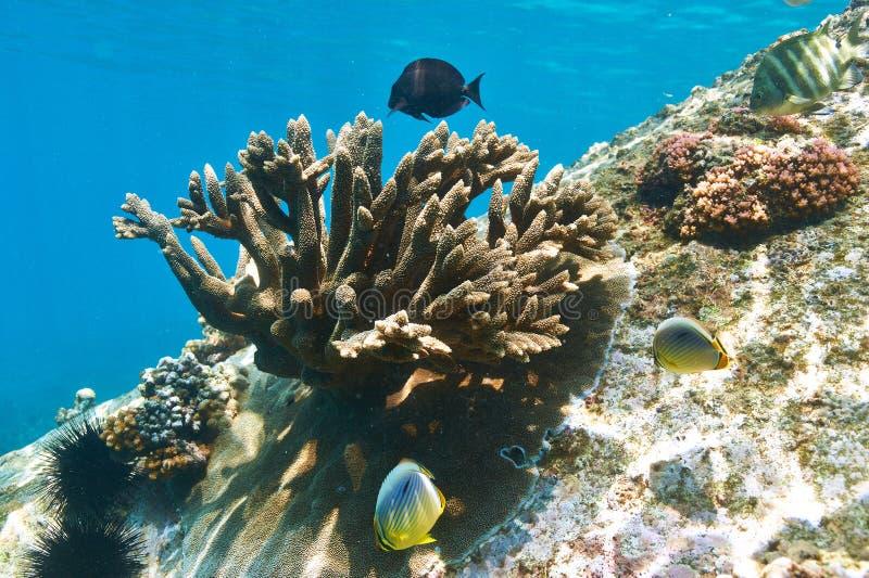Koraalrif en vissen stock foto's