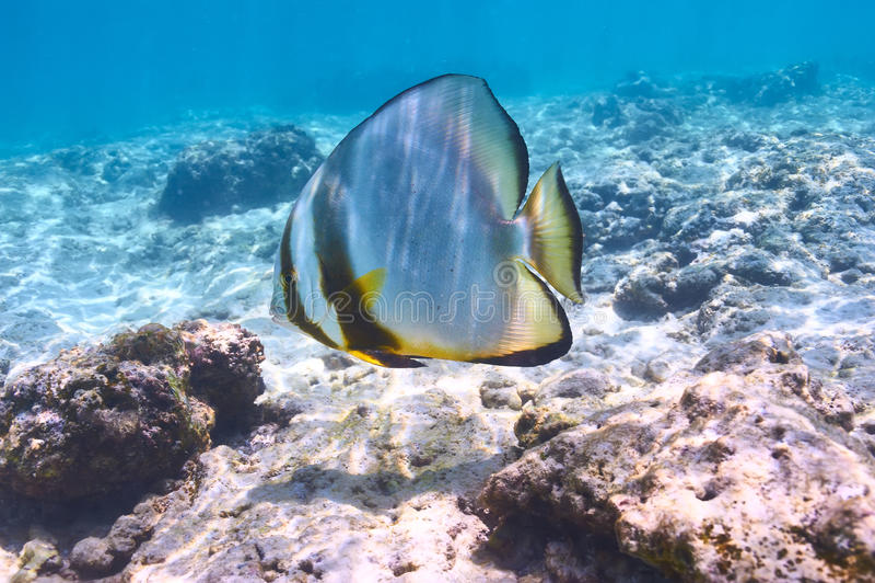 Koraalrif en vissen stock fotografie