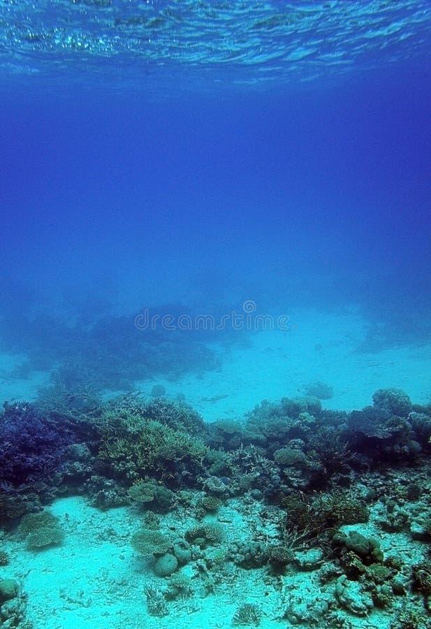 Koraalrif en zand onderwater stock afbeeldingen