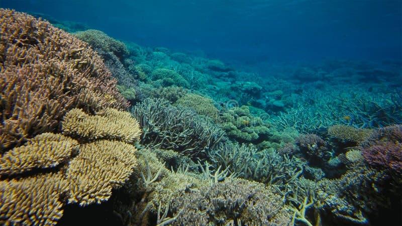 Koraalrif, Groot barrièrerif, Australië Onderwater landschap stock foto's