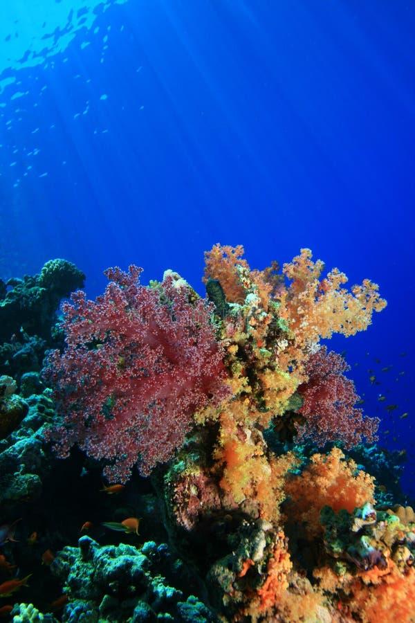 Koraalrif in het Rode Overzees stock afbeeldingen