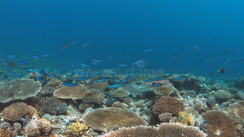 Koraalrif met gezonde harde koralen royalty-vrije stock foto