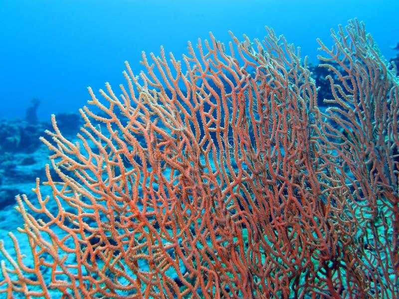 Koraalrif met mooie grote gorgoniam bij de bodem van tropische overzees royalty-vrije stock foto's