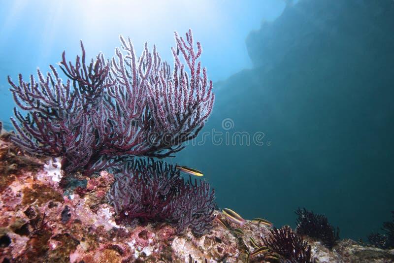 Koraalrif met vissen royalty-vrije stock afbeelding