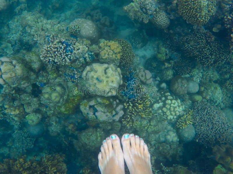 Koraalrif met vrouwen` s hierboven voeten Onderwaterfoto met diverse koralen stock afbeelding