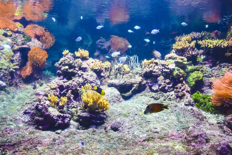 Koraalrif onder water royalty-vrije stock fotografie