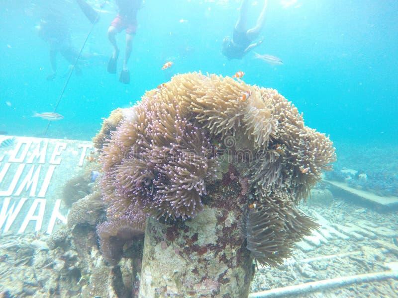 koraalriffen onder het overzees van †‹â€ ‹Pahawang stock foto's