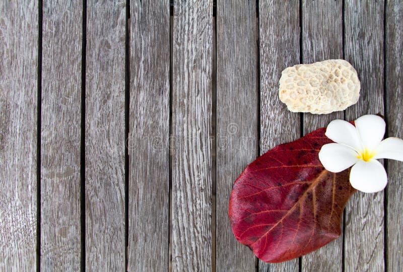 Koraalsteen, plumeriabloem en rood blad Tropisch vakantieconcept De heldere overzeese samenstelling op houten vlakke lijst, legt stock foto